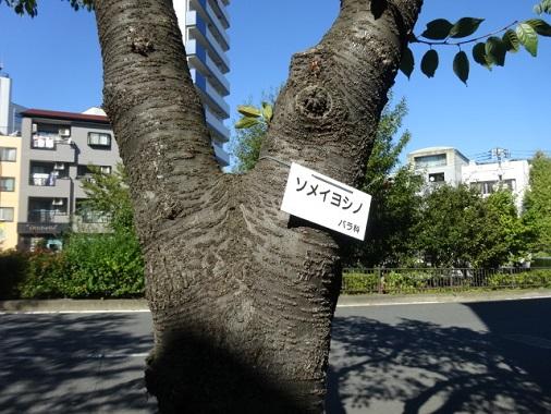 morizumi33.jpg