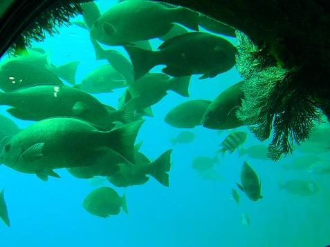 海底のお魚