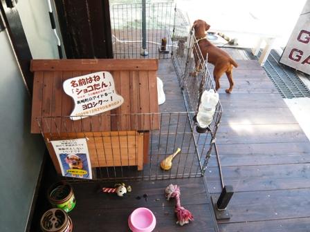 南ヌ島BOXカフェ:ショコたん