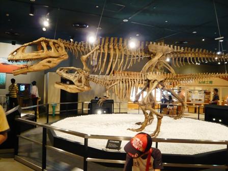 名古屋市科学館:恐竜骨格標本