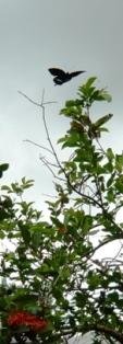 バラビドー観光農園:園内2