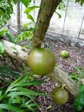 バラビドー観光農園:園内3