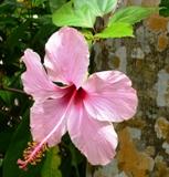 バラビドー観光農園:園内9