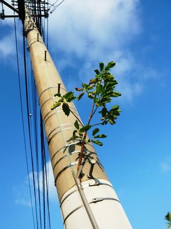 ど根性の樹:先端1