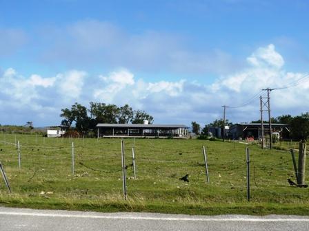 竹富島北部の牧場