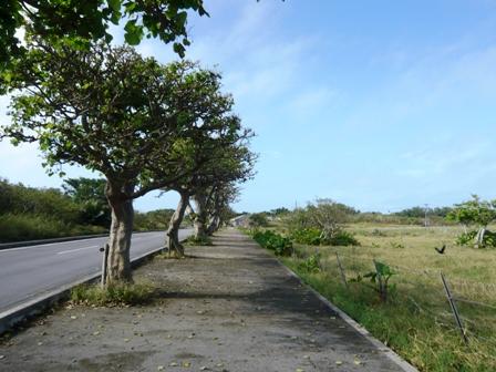 東港から集落へ向かう道