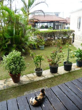 石垣屋:庭