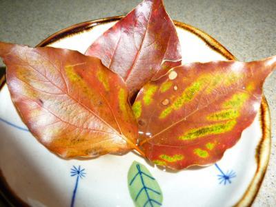 楠の木落ち葉