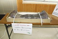 なぎビカリアミュージアム5