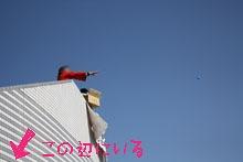 2013多度津フェスティパル2