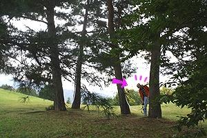 まんのう公園7関係(Oct2013inMANNO)木と木の間を確認する1