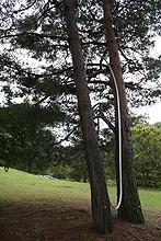 まんのう公園7関係(Oct2013inMANNO)木と木の間を確認する2