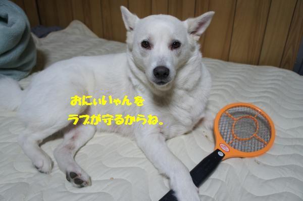 DSC06314_convert_20130619221925.jpg