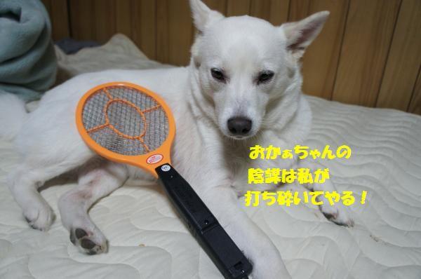 DSC06315_convert_20130619221944.jpg