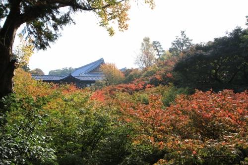 秋の京都旅4