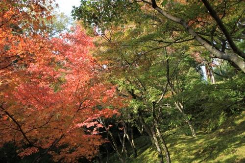 秋の京都旅8