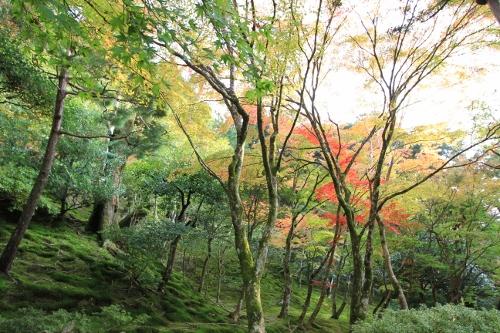 秋の京都旅31