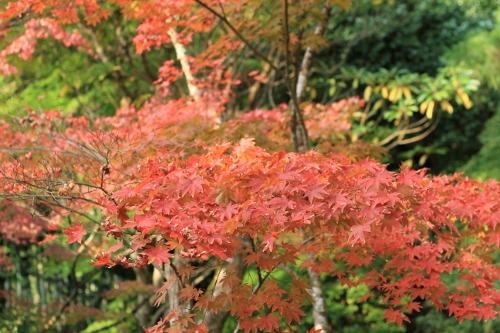 秋の京都旅32