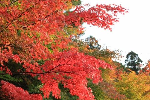 秋の京都旅33