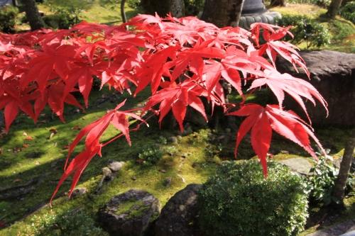 秋の京都旅73