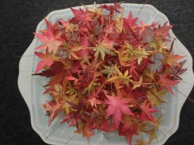 染め紅葉の葉っぱ1