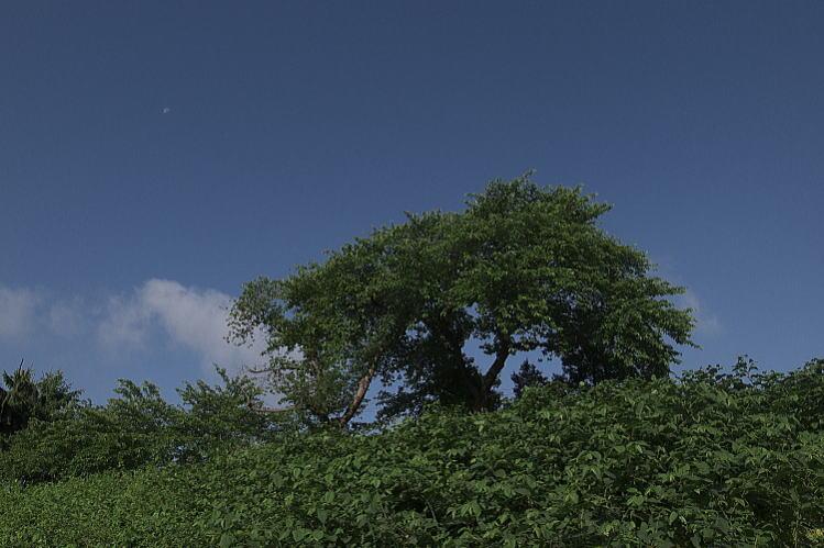 2013-0608-a-00011.jpg
