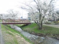 観音寺川1