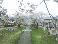 観音寺川2