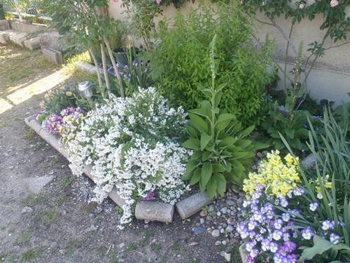 理想の花壇