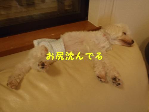 ソファーで眠るマロン