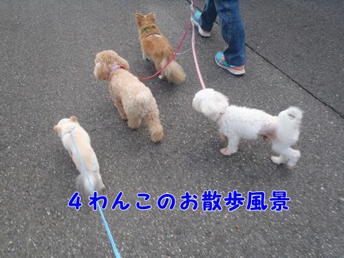4わんこのお散歩