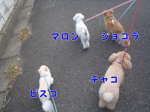4ワンコのお散歩2