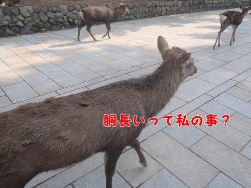 胴が長い鹿