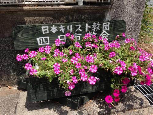 プランターの花