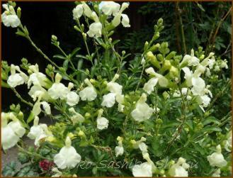 20130520 2 ご近所の花