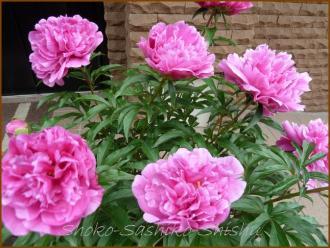 20130520 3 ご近所の花