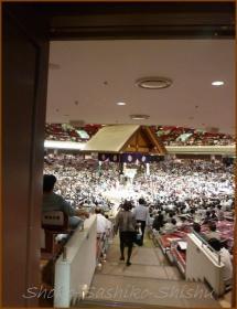 20130523 1階から  お相撲