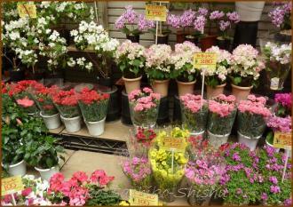 20130530 花や 十条