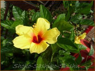 20130819 黄色 1 夏の花