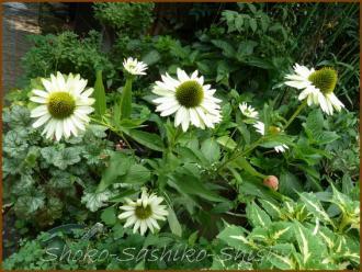 20130819 白色 1 夏の花
