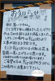 20130819 向日葵 5 夏の花