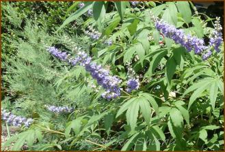 20130821 写真 2 紫の花