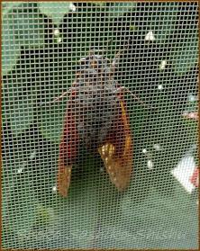 20130823 蝉 1 夏の虫
