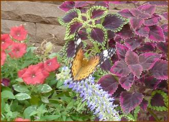 20130823 蝶 11  夏の虫