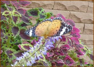 20130823 蝶 13  夏の虫