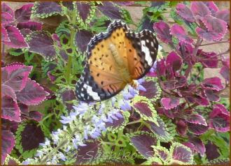 20130823 蝶 14  夏の虫