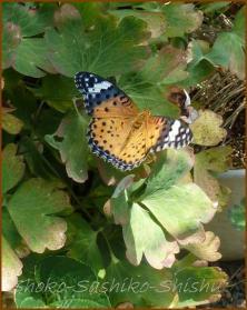 20130823 蝶 22  夏の虫
