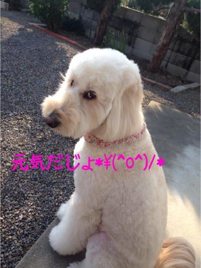 fc2blog_20140202220536b98.jpg