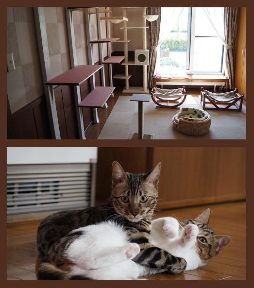 じゃれ合い&猫部屋