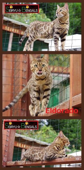Eldorado3.jpg